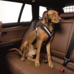 Bilbältessele till hunden