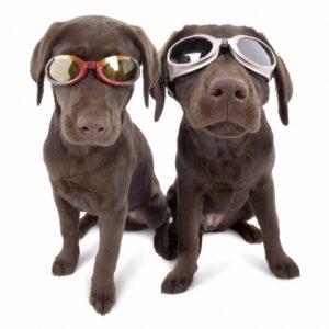 Doggles solglasögon för hundar
