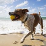Vattenstudsboll till hunden