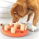 Aktivitetsspel för hunden
