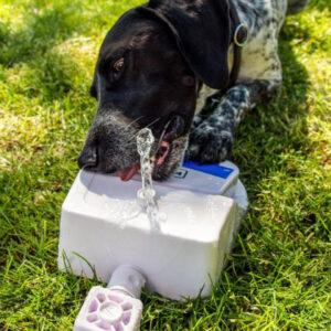 Vattenfontän till hunden