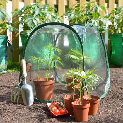 Litet växthus för krukväxter